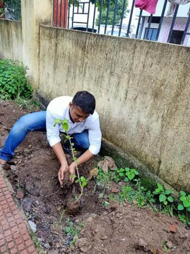 Plantation by office staff